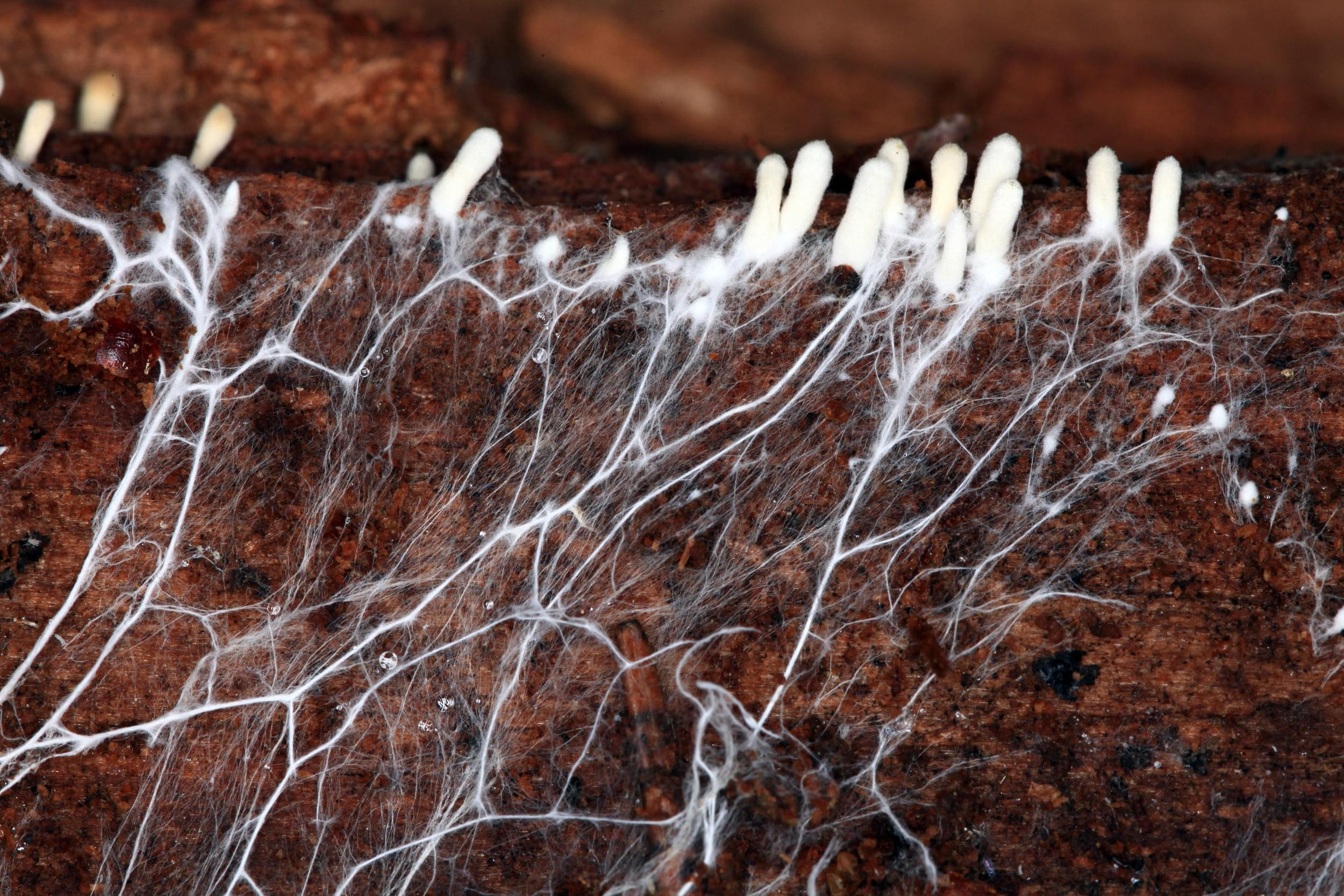 Wurzeln Cannabis Nährstoffe füttern Drainage Sauerstoffanlagen