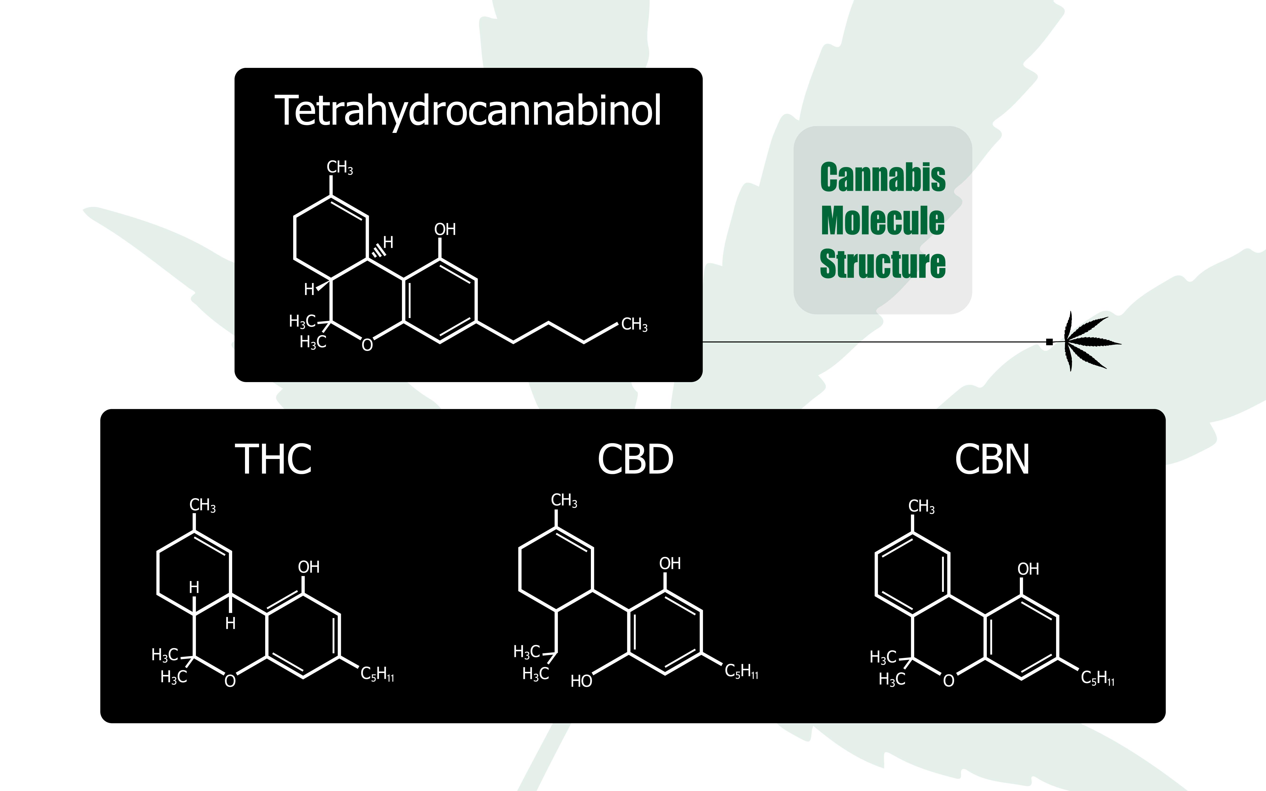 CBD THC Entourage-Effekt entgegenwirkt Symbiose Immunsystem Psyche Cannabis medizinischen Marihuana Cannabinoid Endocannabinoid modulieren