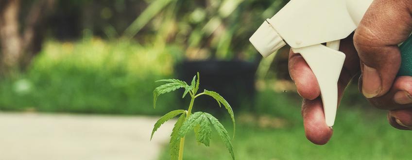 Sie schützt die Pflanzen vor Krankheiten