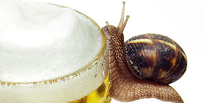 Cannabis beer snail eating trap