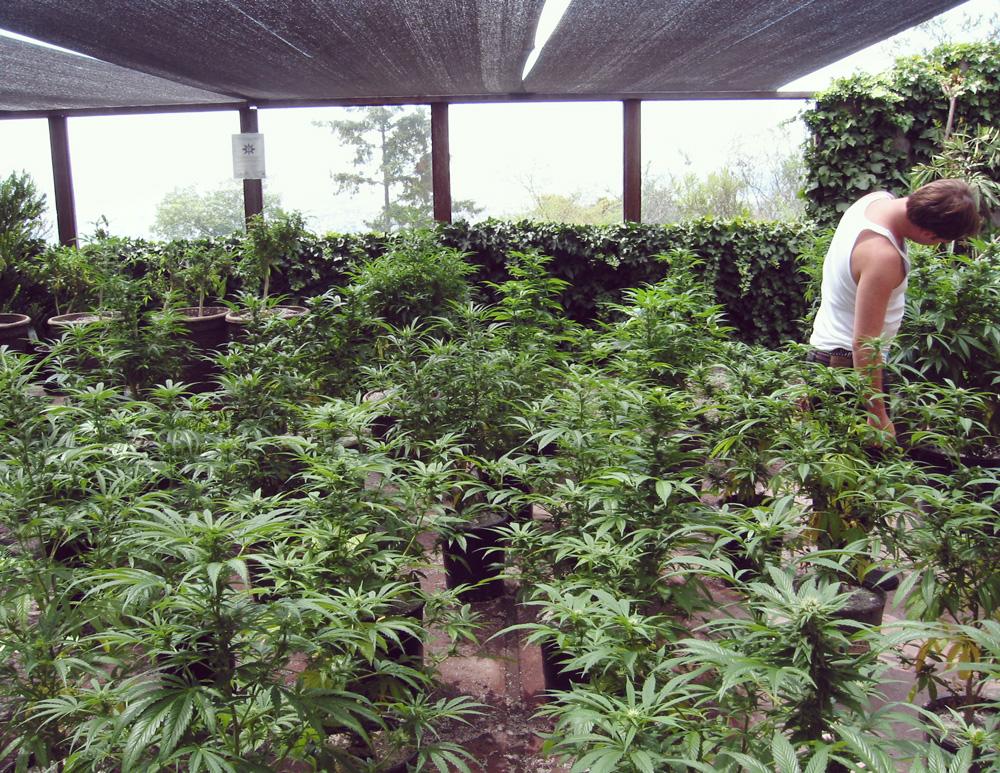 Spanien legalisierung katalonien gesetz entspannende medizinische therapeutische marihuana