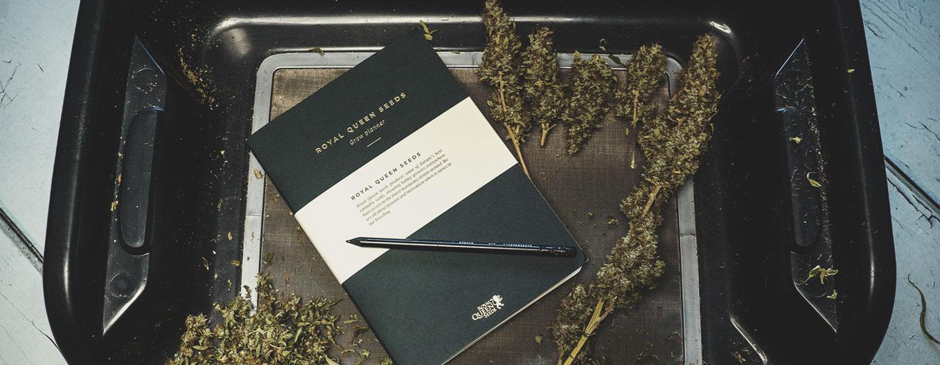 Cannabiskonsumtagebuch