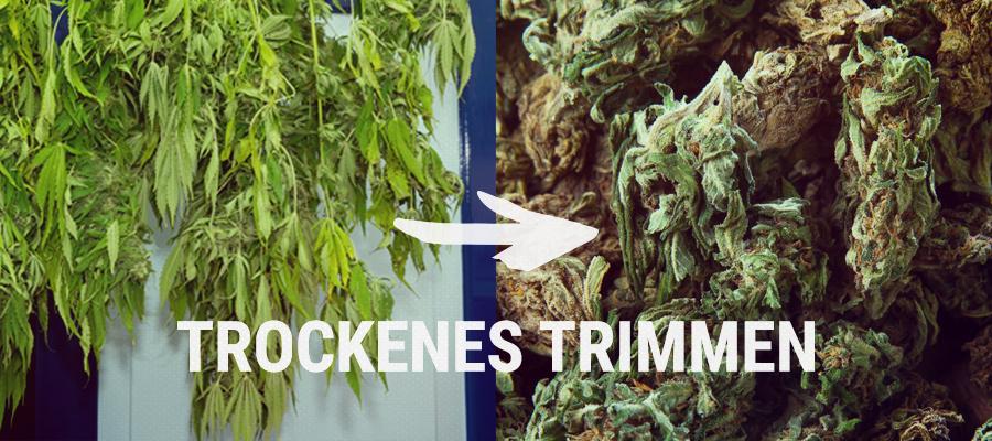 TROCKENES TRIMMEN