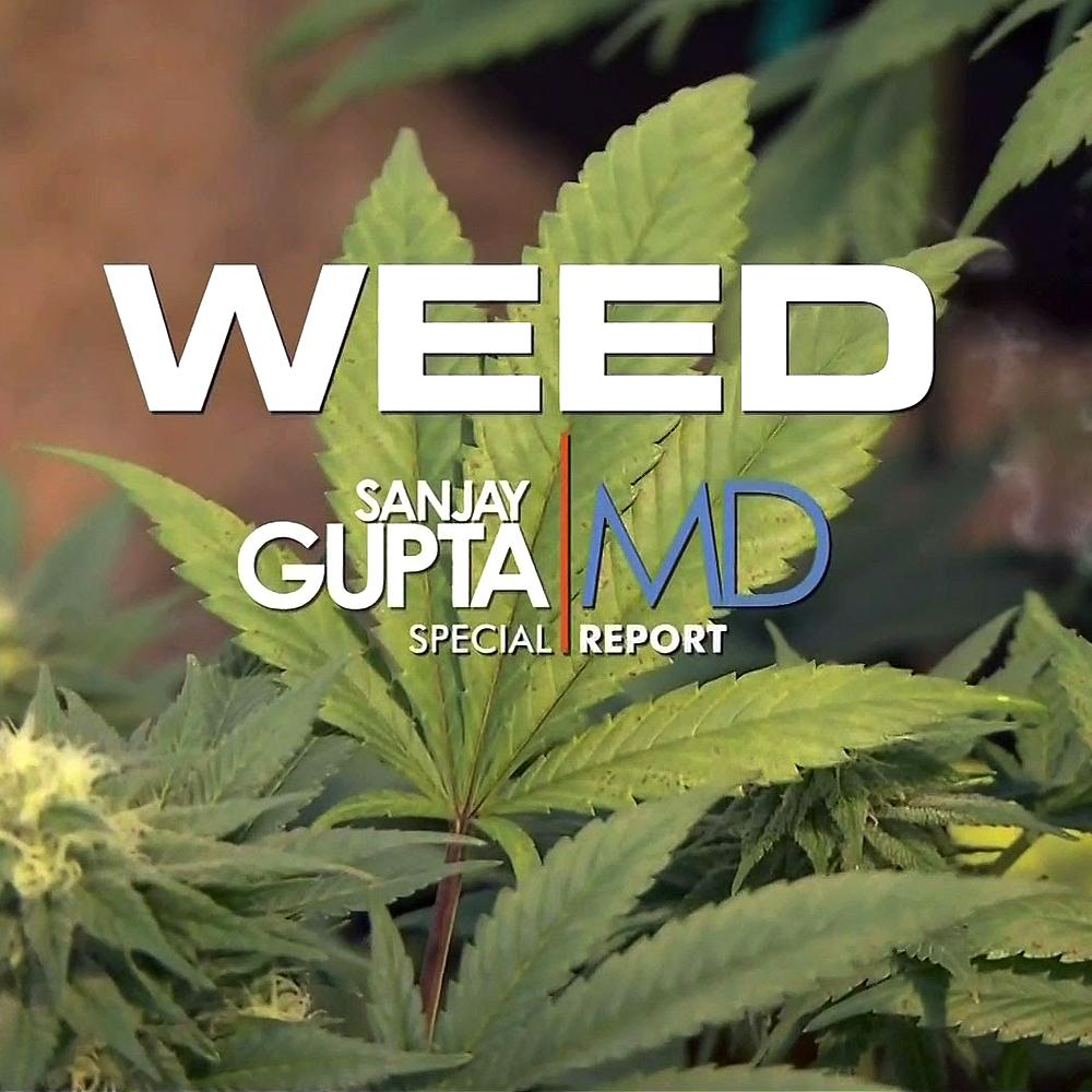 weed dokumentationen modern