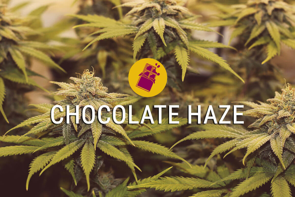 Chocolate Haze Lebe Das Susse Leben Rqs Blog