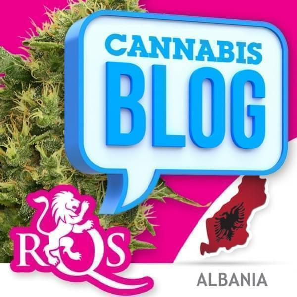 Cannabis in Albanien