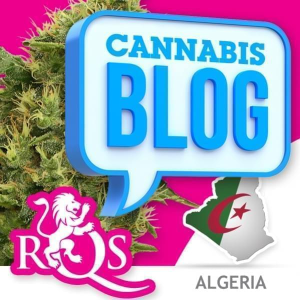 Cannabis in Algerien