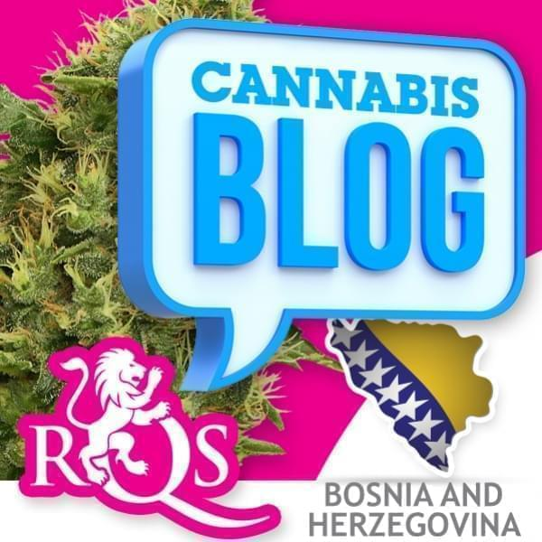 Cannabis in Bosnien Herzegowina