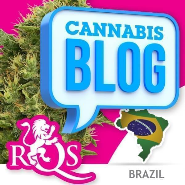 Cannabis in Brasilien