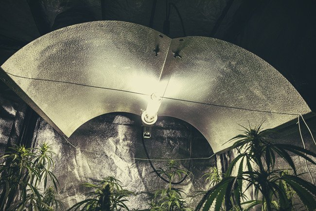 Die Verschiedenen Arten Von Lampen Für Cannabis: Vor Und