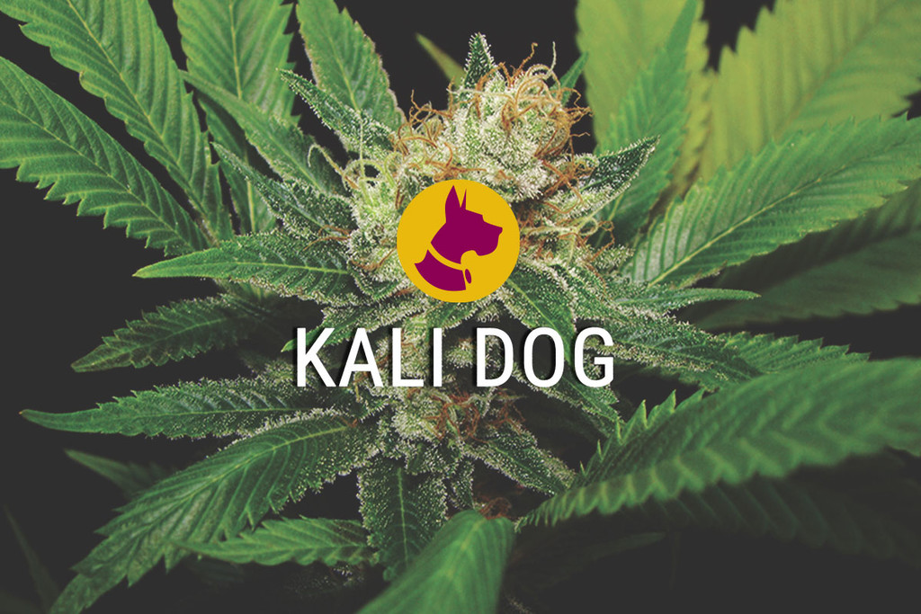 Kali Dog der Royal Chem Dawg