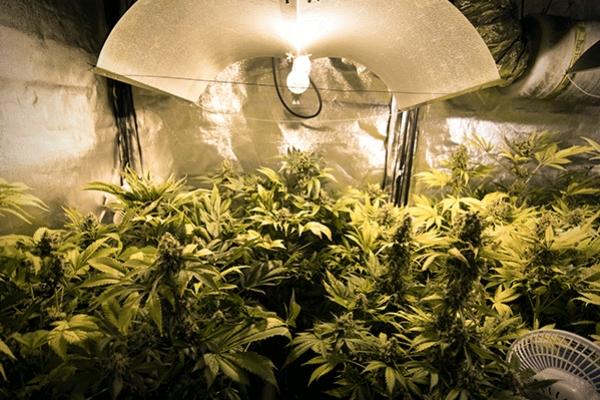 Anleitung F 252 R Den Cannabisanbau Unter K 252 Nstlicher