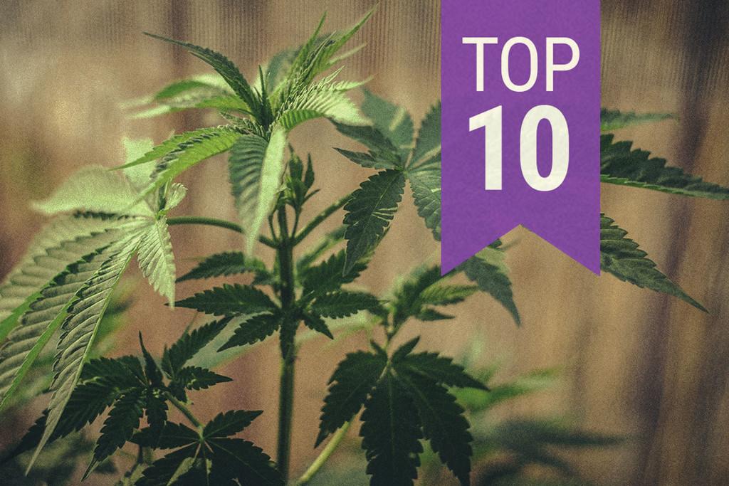 Mit diesen Tipps kannst Du hochwertige Cannabisbilder machen - RQS Blog